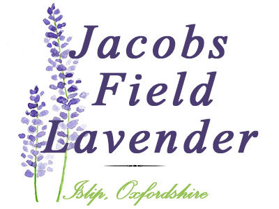 Jacobs Field Lavender